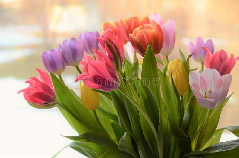 Tulipanes coloridos en un florero foto de archivo