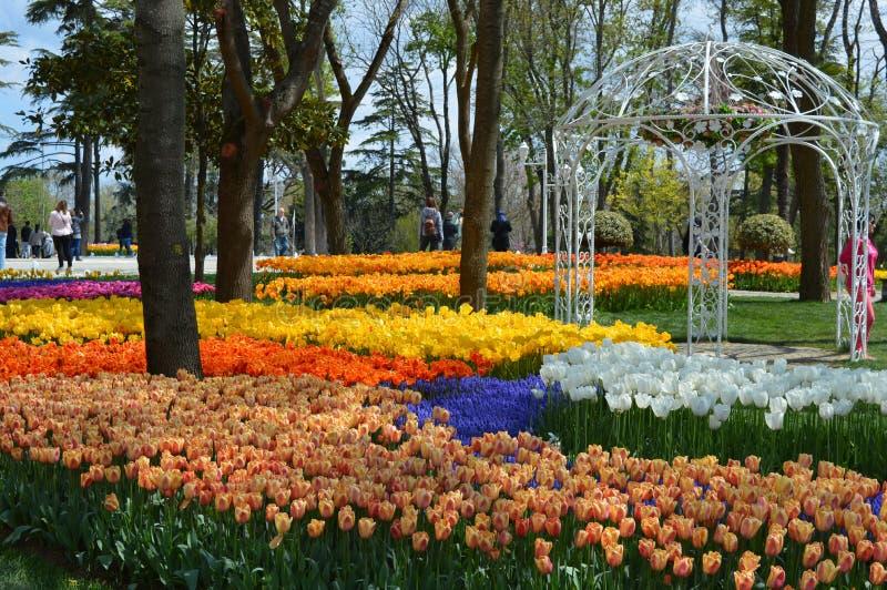 Tulipanes coloridos, más tulipanes de los colores en parque del jardín imagen de archivo libre de regalías