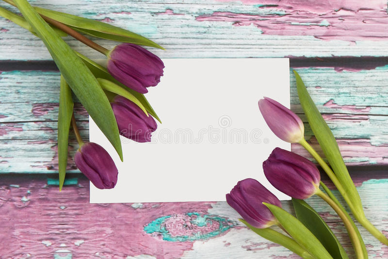 Tulipanes con la tarjeta de felicitaciones fotos de archivo