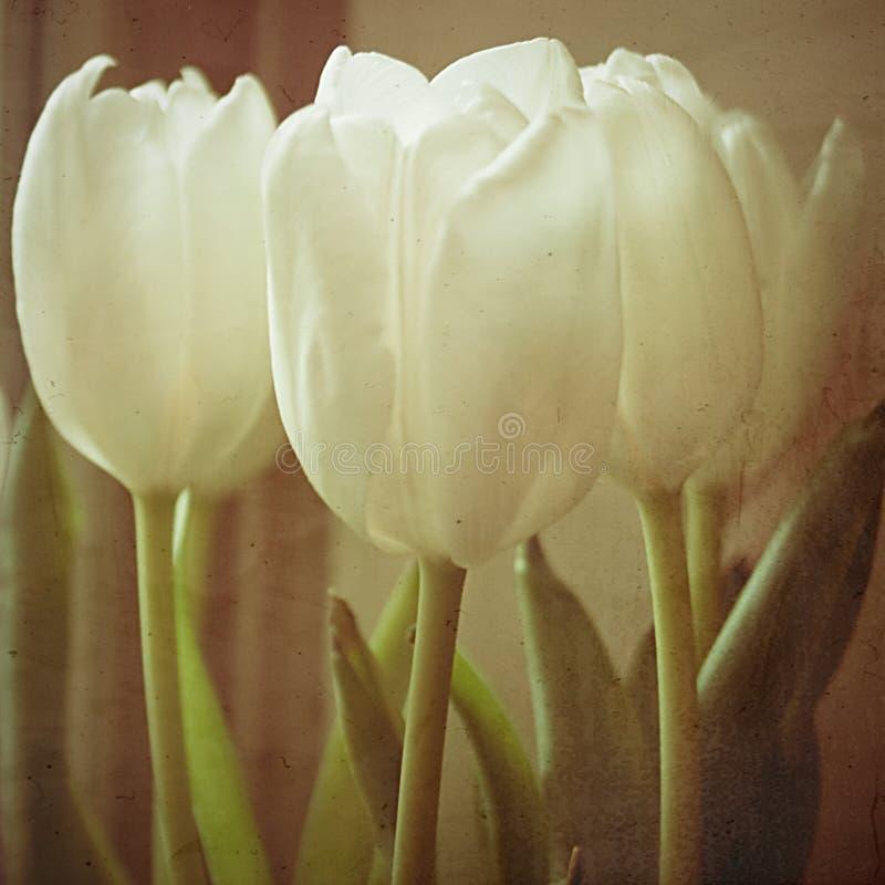 Tulipanes con la textura II fotografía de archivo