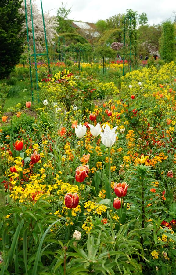 Tulipanes de Colourfull en el jardín de Monet en Giverny imagen de archivo
