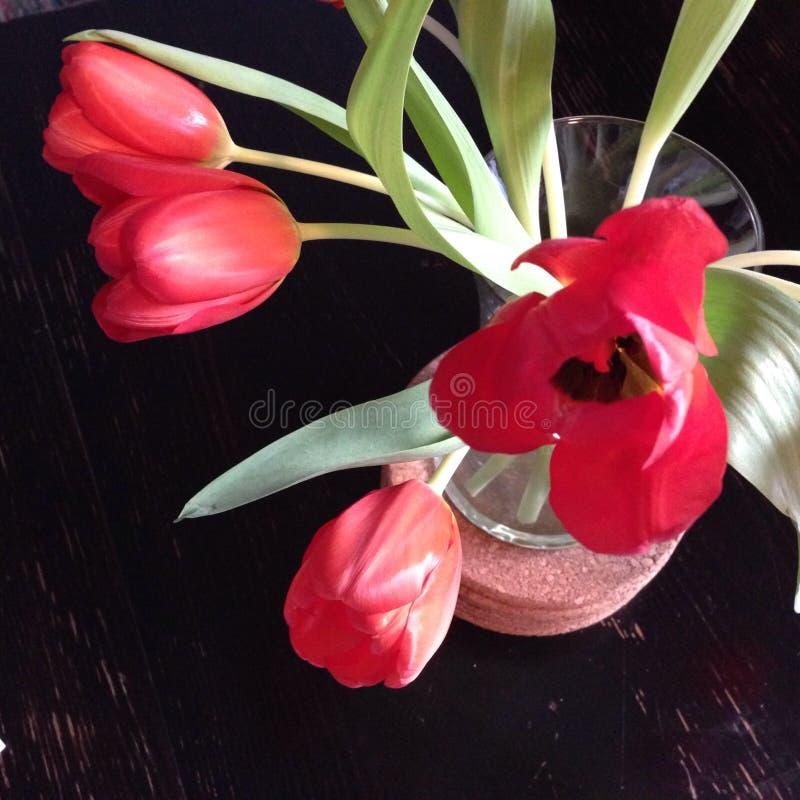 Tulipanes de la primavera fotografía de archivo
