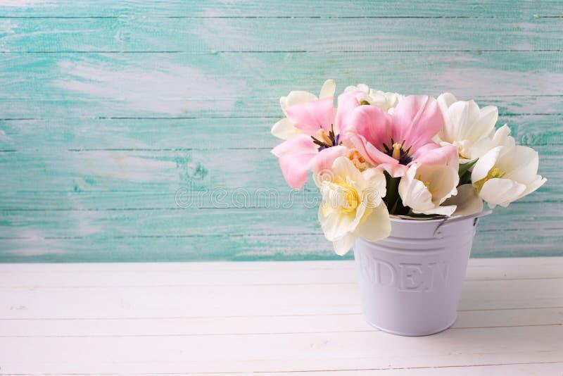 Tulipanes de la primavera fresca y narciso blancos y rosados en el dólar blanco foto de archivo libre de regalías