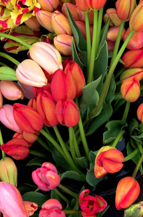Tulipanes del art déco fotografía de archivo