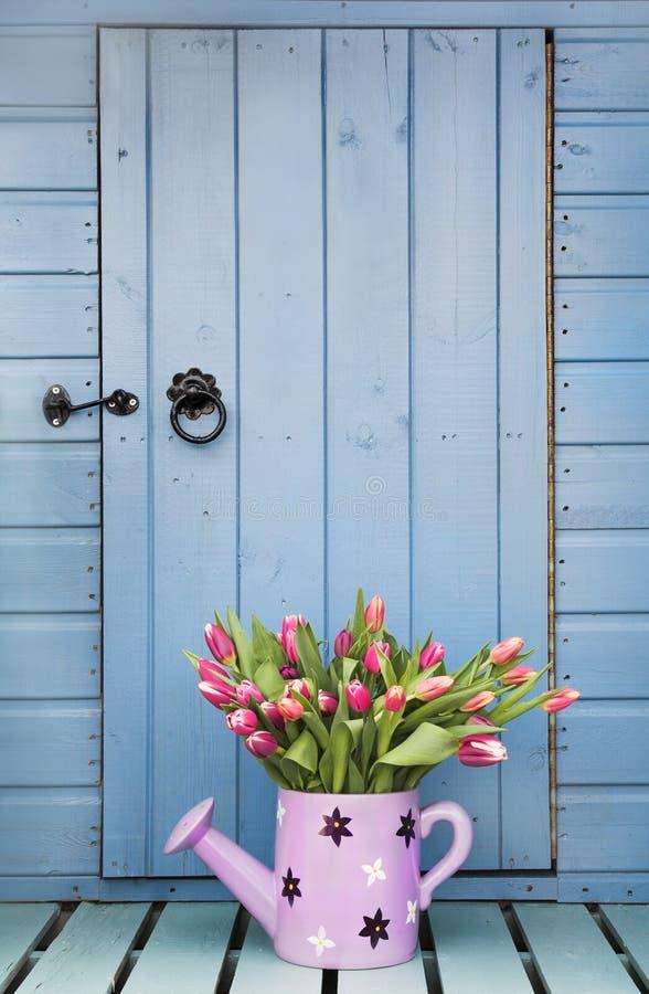 Tulipanes del resorte y vertiente del jardín imágenes de archivo libres de regalías