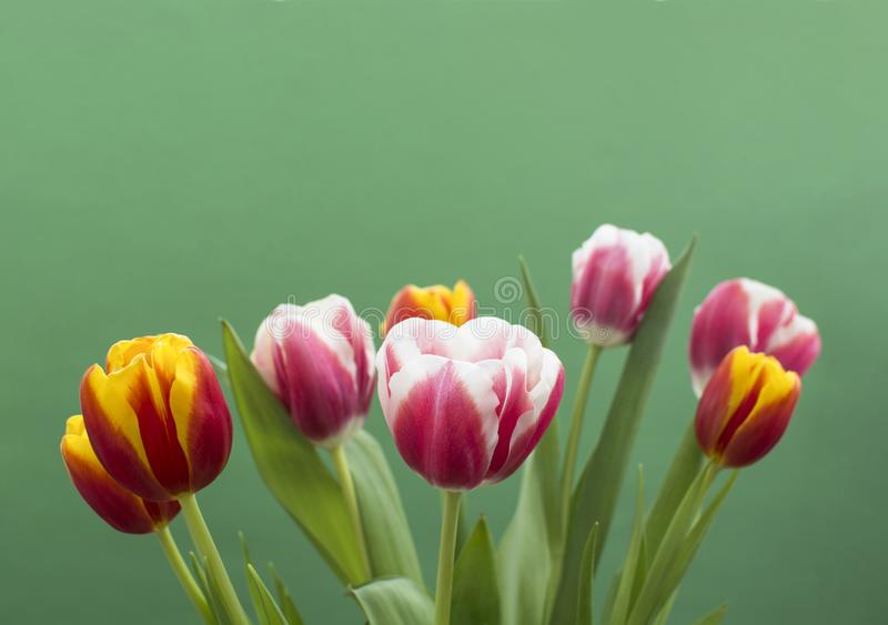 Tulipanes dulces en fondo verde imagenes de archivo