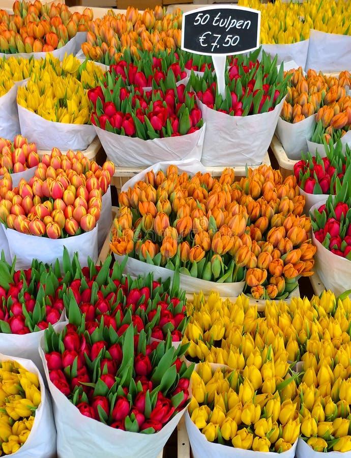 Tulipanes en Amsterdam foto de archivo libre de regalías