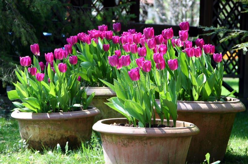 Tulipanes en el crisol de la cerámica foto de archivo