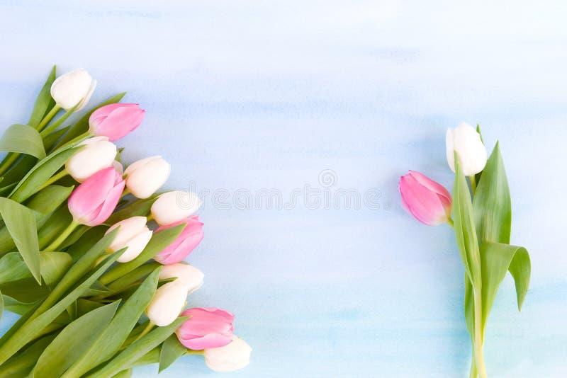 Tulipanes en fondo azul en colores pastel de la acuarela fotografía de archivo