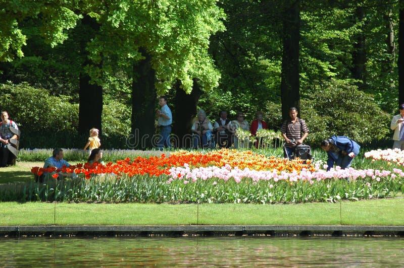 Download Tulipanes en Keukenhof fotografía editorial. Imagen de holandés - 41911242