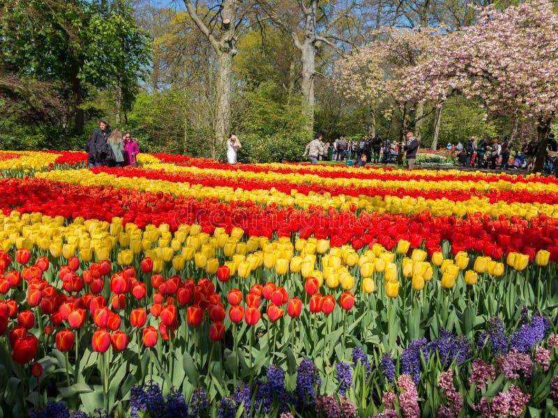 Tulipanes en Keukenhof, Países Bajos