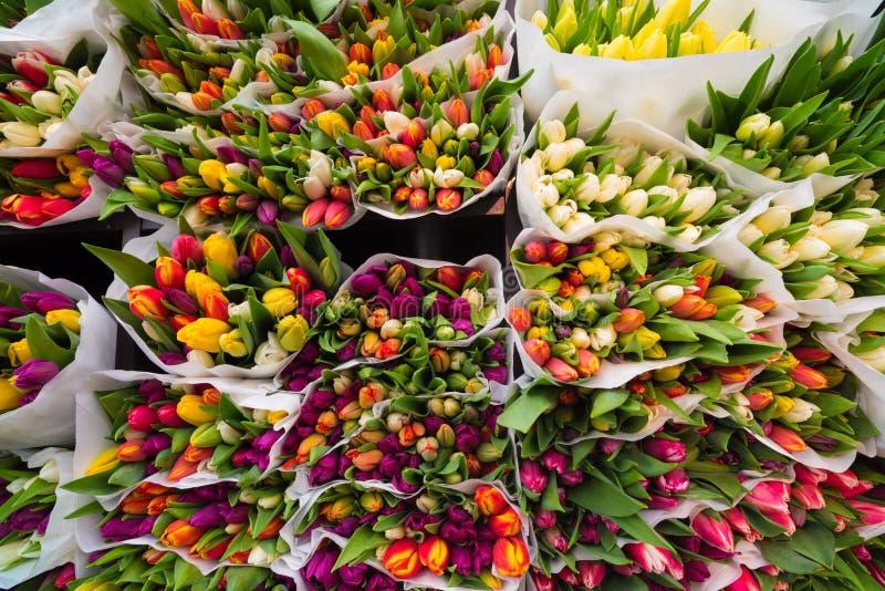 Tulipanes en subasta foto de archivo libre de regalías