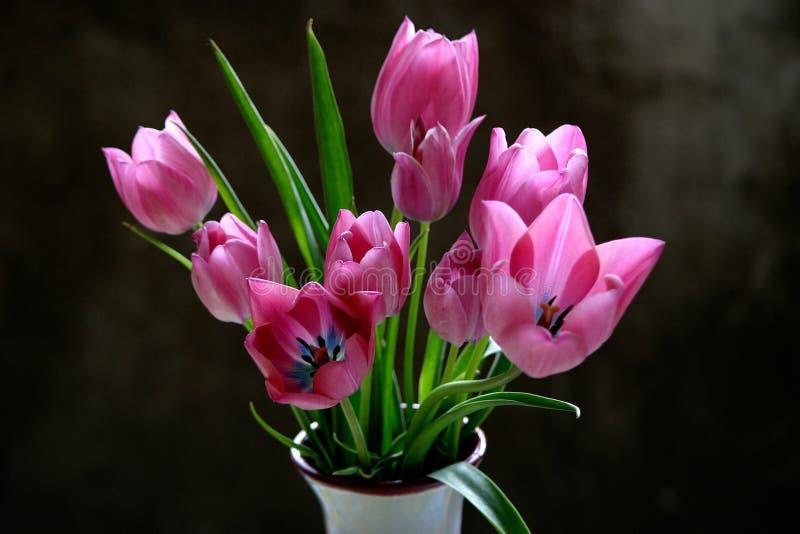 Tulipanes en un florero fotografía de archivo libre de regalías
