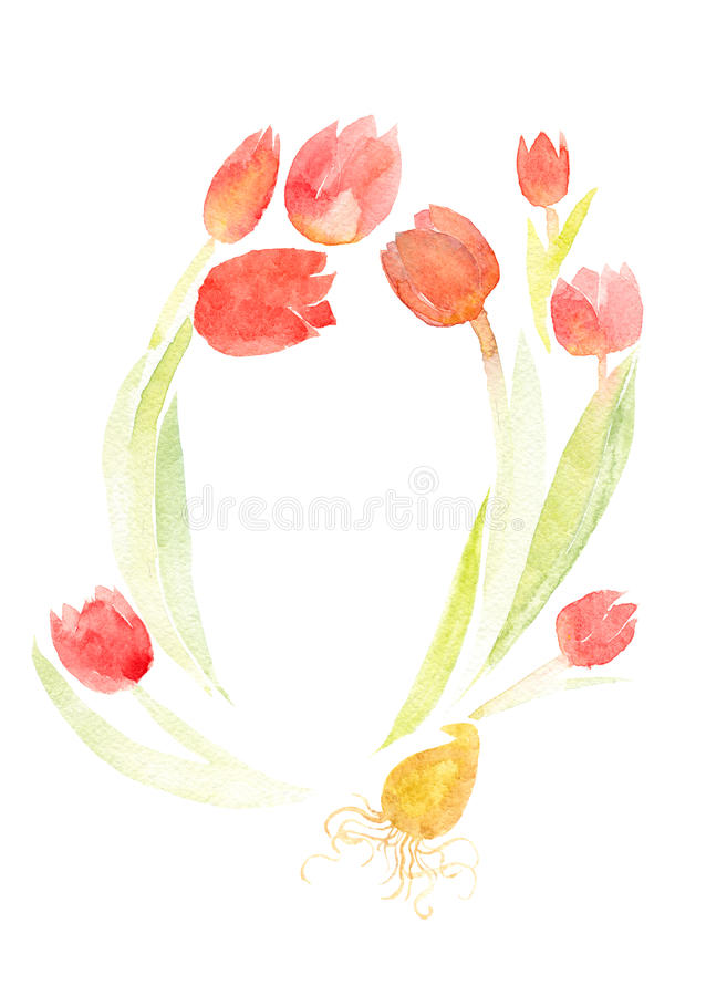 Tulipanes en un fondo blanco fotos de archivo