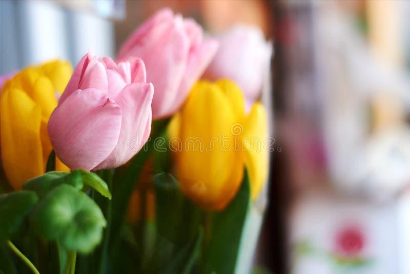 Tulipanes en un fondo neutral Apenas llovido encendido Postal para el día de tarjeta del día de San Valentín, el día de las mujer fotografía de archivo