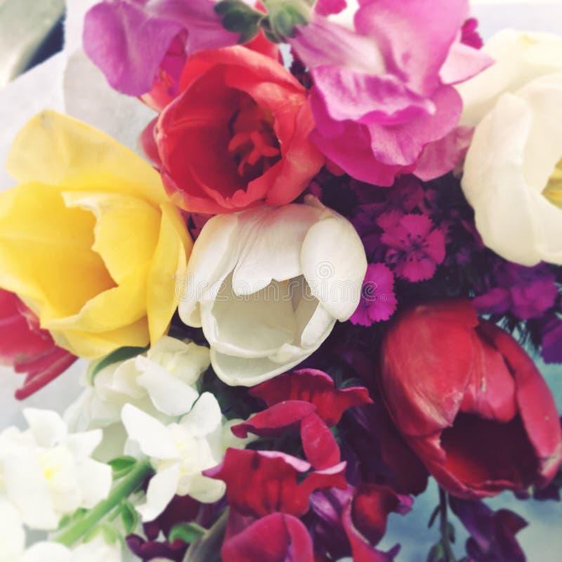 Tulipanes felices fotos de archivo