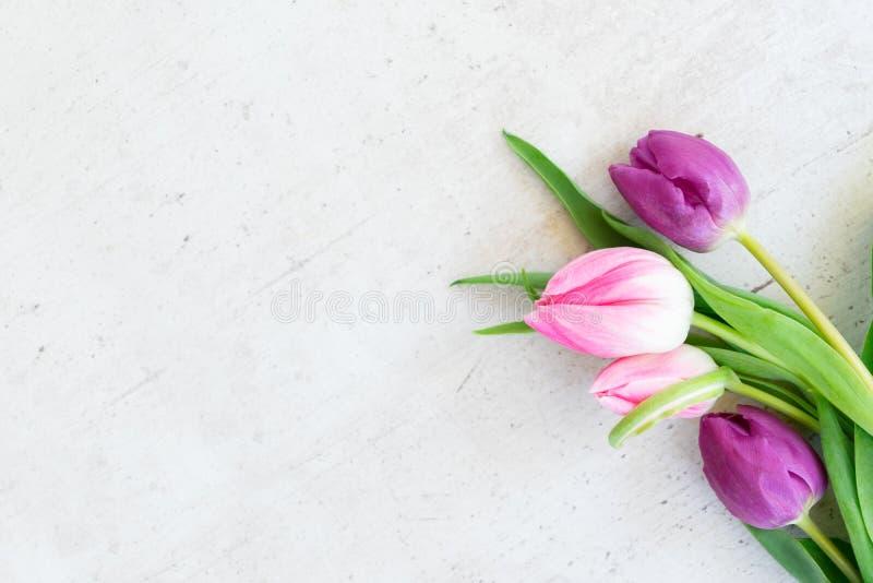Tulipanes frescos rosados imagen de archivo