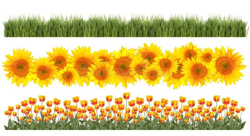 Tulipanes, girasoles y fronteras de la hierba fotos de archivo libres de regalías