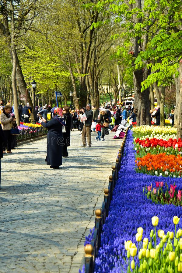 Tulipanes magn?ficos coloridos y jacinto ?rabe en primavera Emirgan Korusu fotos de archivo