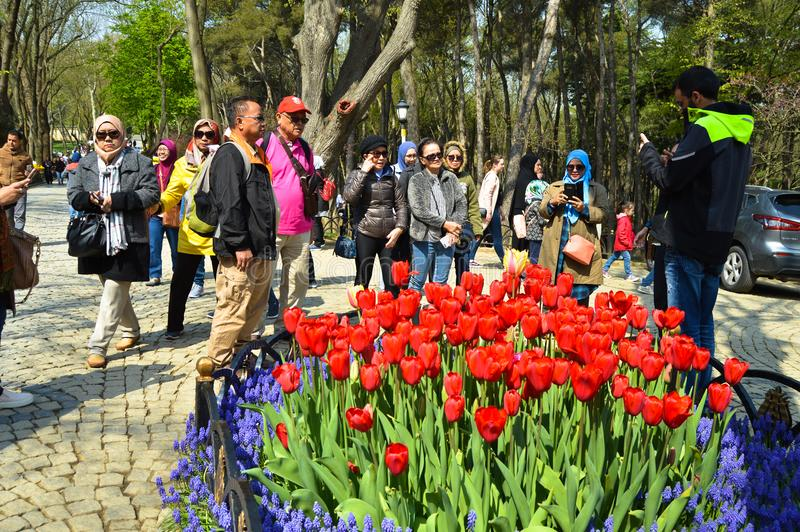 Tulipanes magn?ficos coloridos y jacinto ?rabe en primavera Emirgan Korusu imágenes de archivo libres de regalías