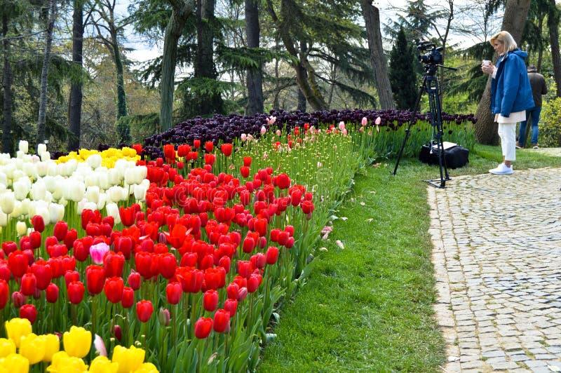 Tulipanes magn?ficos coloridos y jacinto ?rabe en primavera Emirgan Korusu foto de archivo libre de regalías