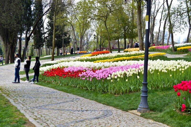 Tulipanes magn?ficos coloridos y jacinto ?rabe en primavera Emirgan Korusu imagen de archivo