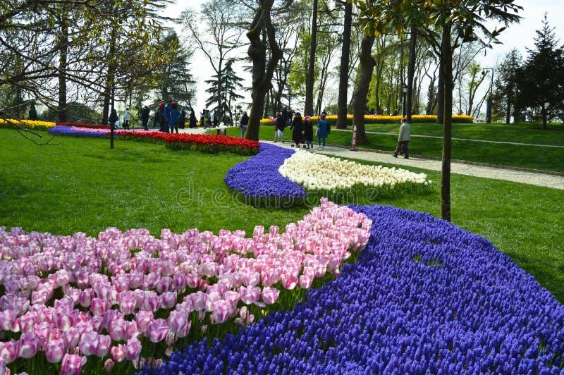 Tulipanes magn?ficos coloridos y jacinto ?rabe en primavera foto de archivo libre de regalías