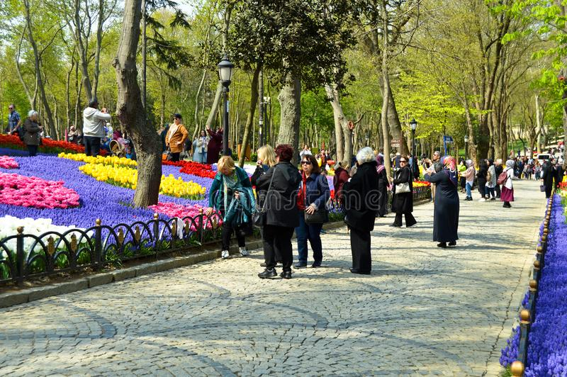 Tulipanes magn?ficos coloridos y jacinto ?rabe en primavera fotografía de archivo