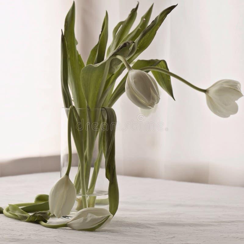 Tulipanes marchitados imagen de archivo libre de regalías