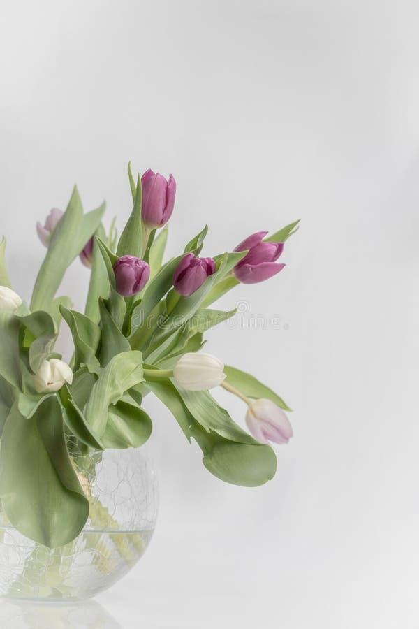 Tulipanes púrpuras en el florero de cristal en el fondo blanco imagen de archivo