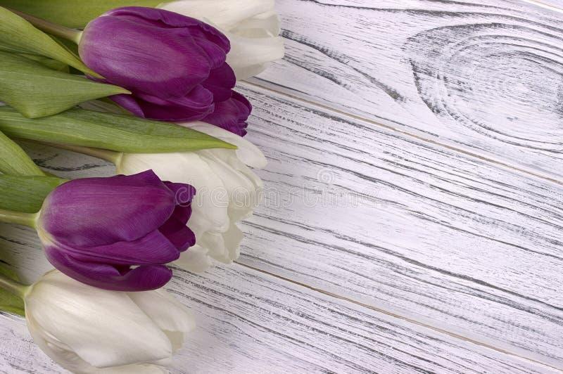 Tulipanes púrpuras y blancos en un fondo de madera blanco El día de la mujer 8 de marzo imagen de archivo libre de regalías