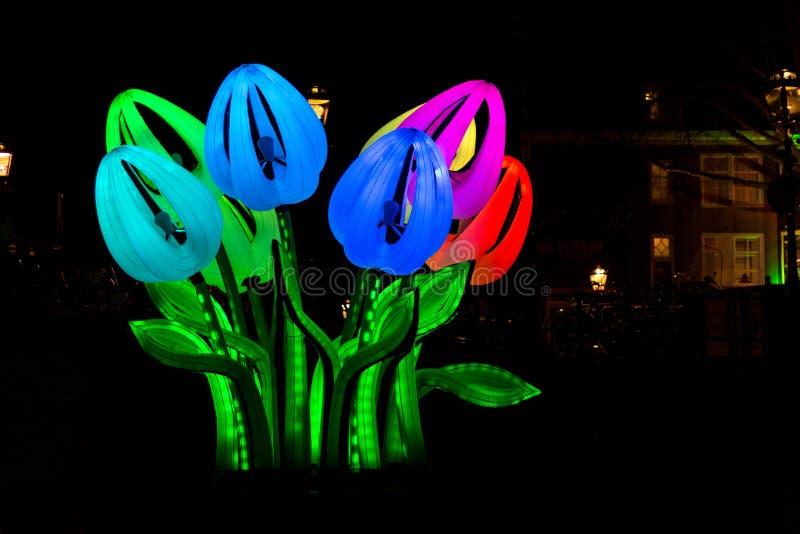 Tulipanes por noche en el festival de la luz de Amsterdam fotografía de archivo