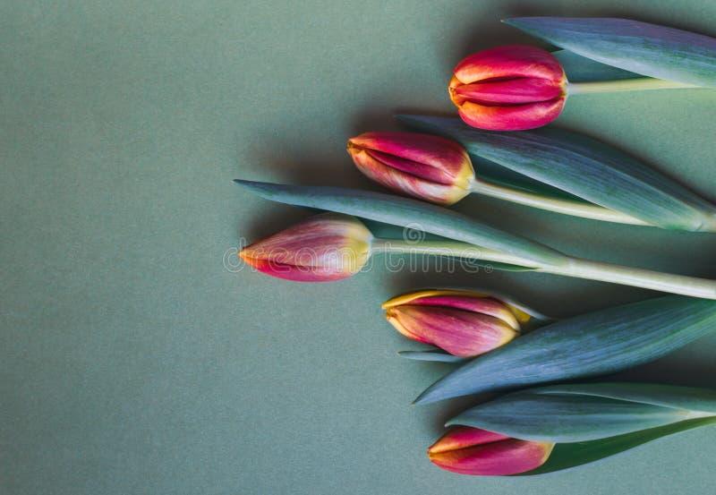 Tulipanes rojos, anaranjados y amarillos frescos en fondo verde fotos de archivo