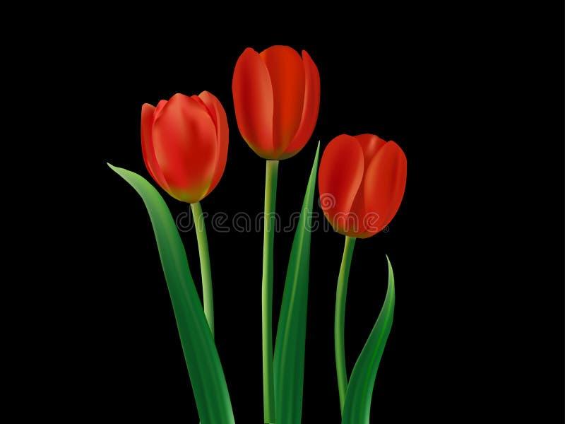 Tulipanes rojos en negro stock de ilustración