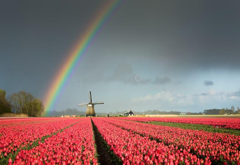 Tulipanes rojos, un molino de viento y un arco iris imagenes de archivo