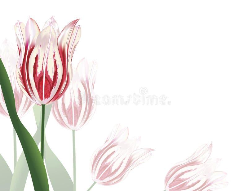 Tulipanes rosados stock de ilustración