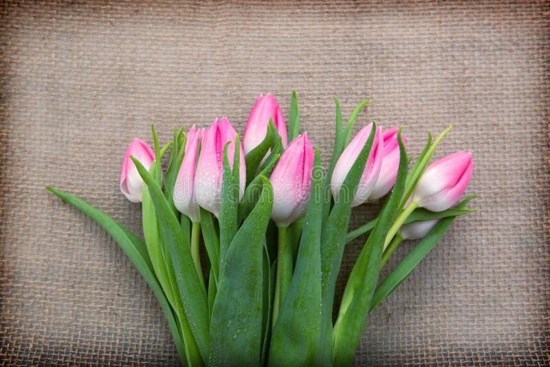 Tulipanes rosados aislados en fondo marrón del paño fotografía de archivo