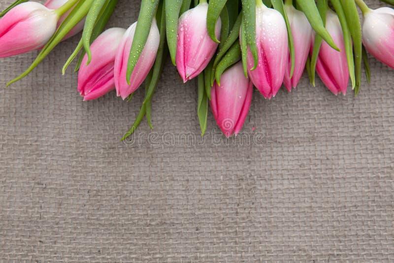 Tulipanes rosados aislados en fondo marr?n del pa?o fotografía de archivo