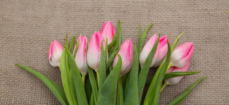 Tulipanes rosados aislados en fondo marr?n del pa?o imagenes de archivo