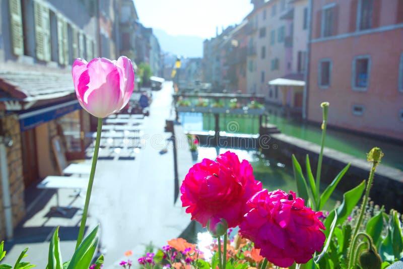 Tulipanes rosados cerca del canal en Annecy, Francia D?a de verano soleado brillante foto de archivo