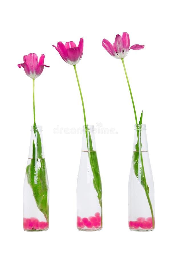 Tulipanes rosados en botellas foto de archivo libre de regalías