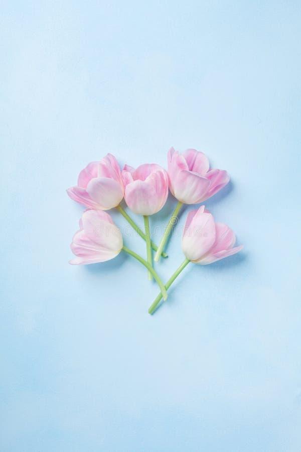 Tulipanes rosados en la opinión superior del fondo en colores pastel azul Tarjeta de felicitación de la primavera con el espacio  foto de archivo