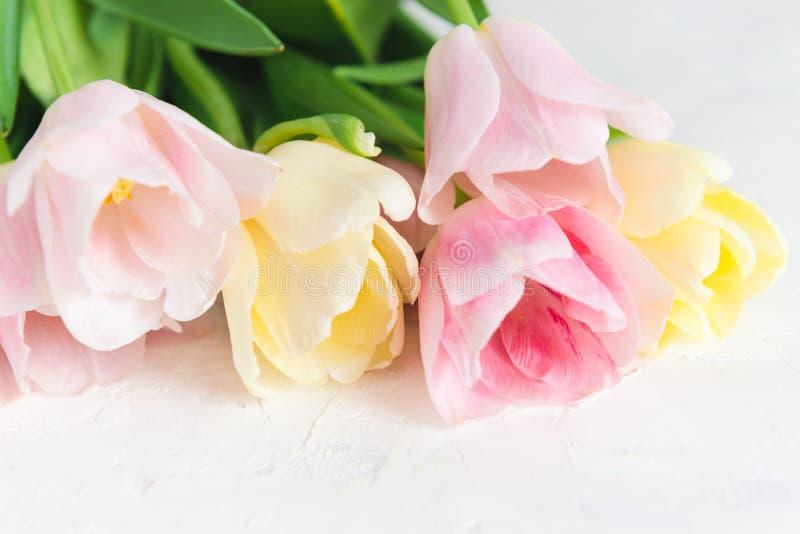 Tulipanes rosados frescos en el fondo blanco Cierre para arriba Para la bandera o la tarjeta de felicitación Apenas llovido encen fotos de archivo