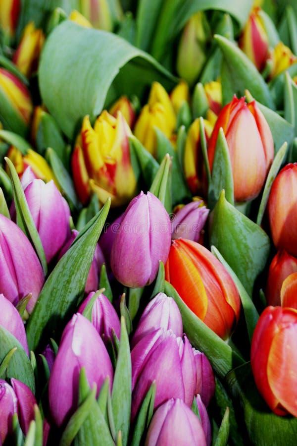 Tulipanes rosados, rojos y amarillos en una exhibición I del mercado fotografía de archivo libre de regalías