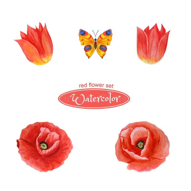 Tulipanes y amapola, cabezas de flor Aislado en el fondo blanco ilustración del vector