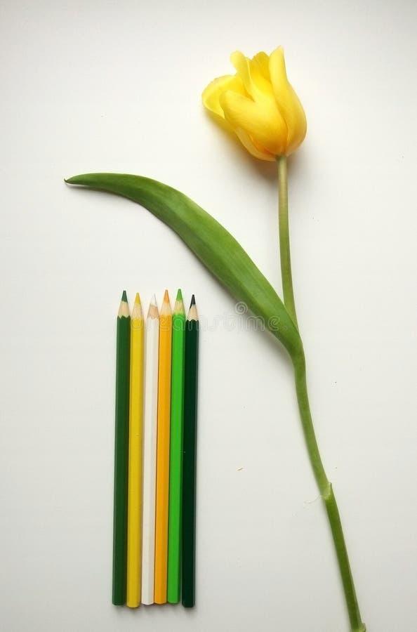 Tulipanes y lápices amarillos fotografía de archivo