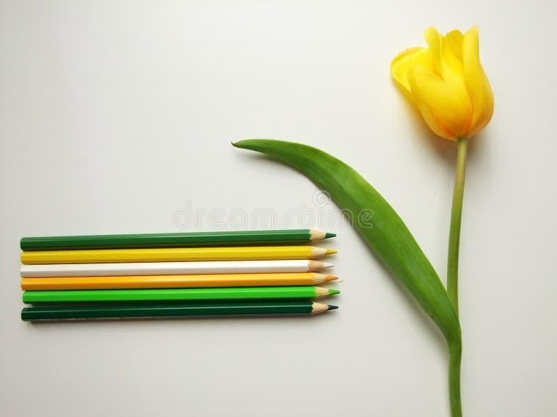 Tulipanes y lápices amarillos foto de archivo