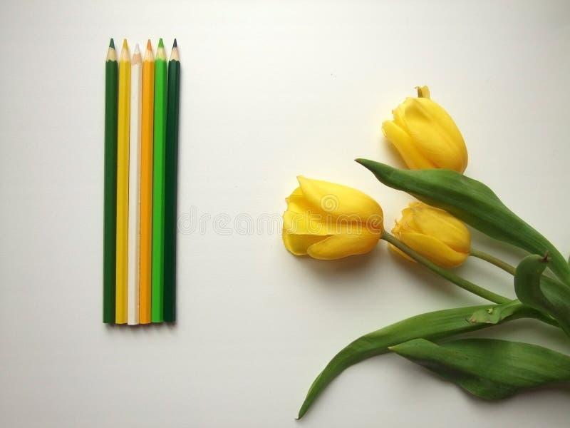 Tulipanes y lápices amarillos imágenes de archivo libres de regalías
