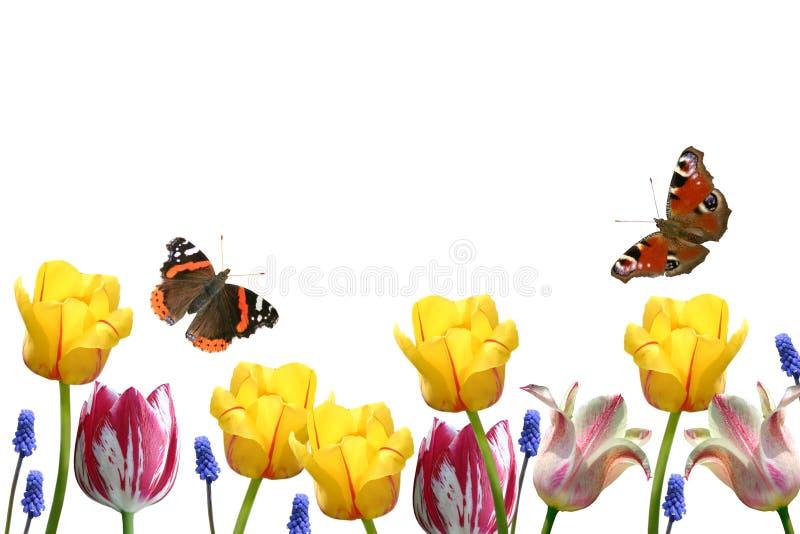 Tulipanes y mariposas imágenes de archivo libres de regalías