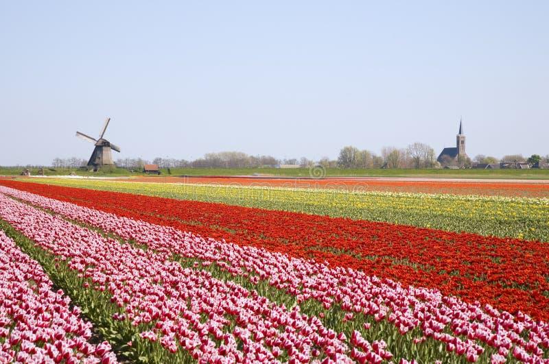 Tulipanes y molino de viento 4 imágenes de archivo libres de regalías